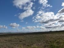 Flint Marsh