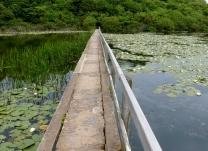 Bosherston Lily Ponds, Pembrokeshire